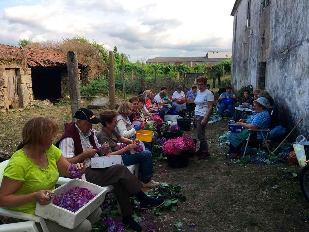 Fiesta del Corpus en Rarís